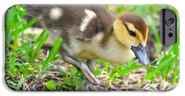Baby Bird iPhone Cases - Fuzzy Little Duckling iPhone Case by Richard Bryce and Family
