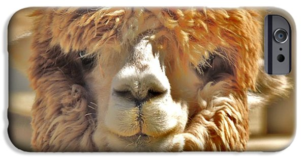Temecula iPhone Cases - Fuzzy Wuzzy Alpaca iPhone Case by Helen Carson