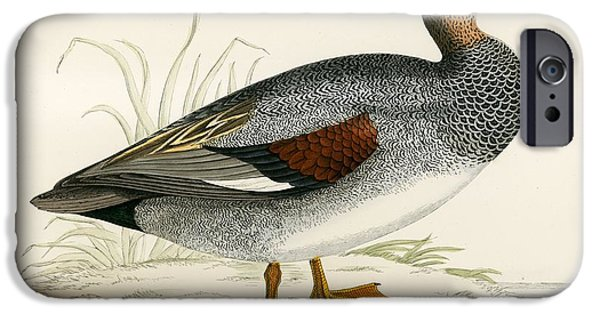 Hunting Bird iPhone Cases - Gadwall iPhone Case by Beverley R. Morris