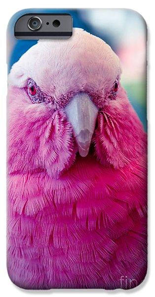 Cockatoo iPhone Cases - Galah - Eolophus roseicapilla - Pink And Grey - Roseate Cockatoo Maui Hawaii iPhone Case by Sharon Mau