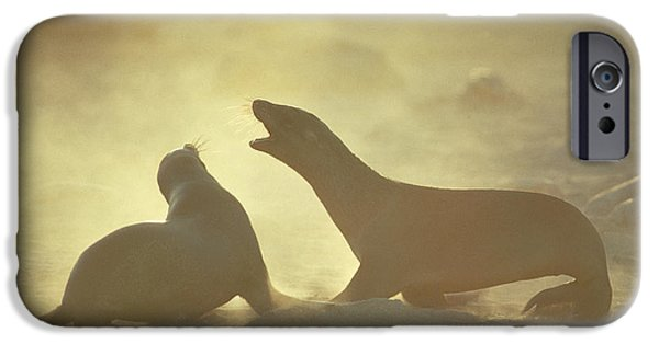 Couple iPhone Cases - Galapagos Sea Lion Pups Romping On Beach iPhone Case by Tui De Roy