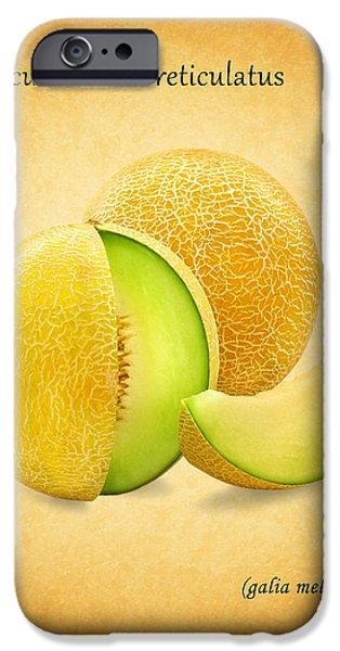 Sweet Corn iPhone Cases - Galia Melon iPhone Case by Mark Rogan