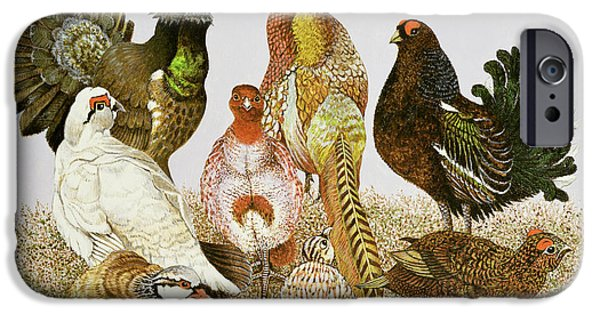 Pheasant iPhone Cases - Game Birds iPhone Case by Pat Scott