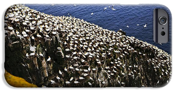Reserve iPhone Cases - Gannets at Cape St. Marys Ecological Bird Sanctuary iPhone Case by Elena Elisseeva