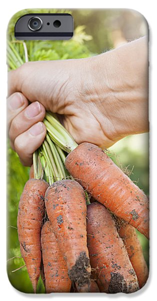 Dirty iPhone Cases - Garden carrots iPhone Case by Elena Elisseeva