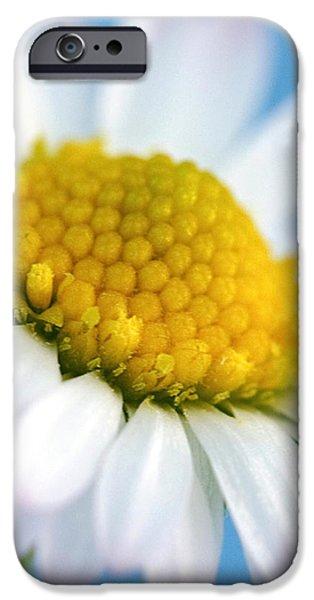 Garden Daisy iPhone Case by Natalie Kinnear