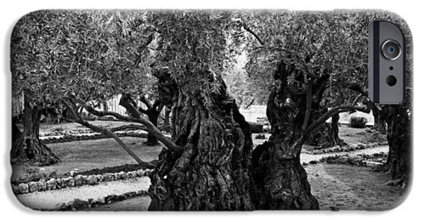 Holy Week iPhone Cases - Garden of Gethsemane Olive Tree iPhone Case by Stephen Stookey