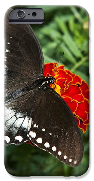 Garden Spice Butterfly iPhone Case by Christina Rollo