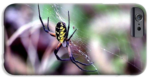 Creepy iPhone Cases - Garden Spider iPhone Case by Deena Stoddard