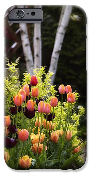 Garden Scene Photographs iPhone Cases - Garden Tulips iPhone Case by Julie Palencia
