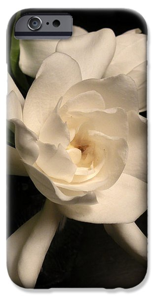 Gardenia Blossom iPhone Case by Deborah Smith