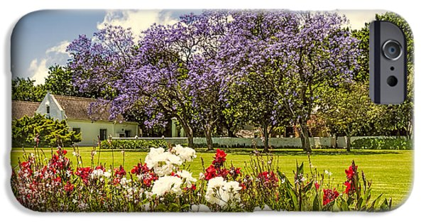 Stellenbosch iPhone Cases - In Bloom iPhone Case by Maria Coulson