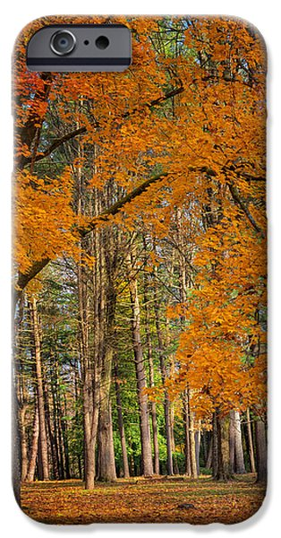 Litchfield County Landscape iPhone Cases - Gateway to the forest iPhone Case by Bill  Wakeley
