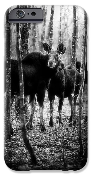 Gathering of Moose iPhone Case by Bob Orsillo