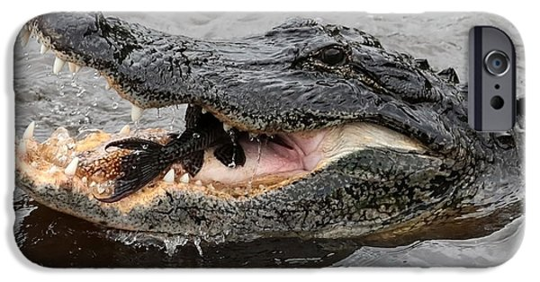 Action Shot iPhone Cases - Gator Dinner iPhone Case by Carol Groenen
