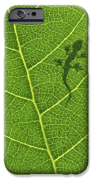 Flora iPhone Cases - Gecko iPhone Case by Aged Pixel