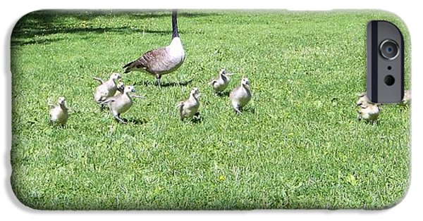 Baby Bird iPhone Cases - Geese and Goslings iPhone Case by Kate Scott