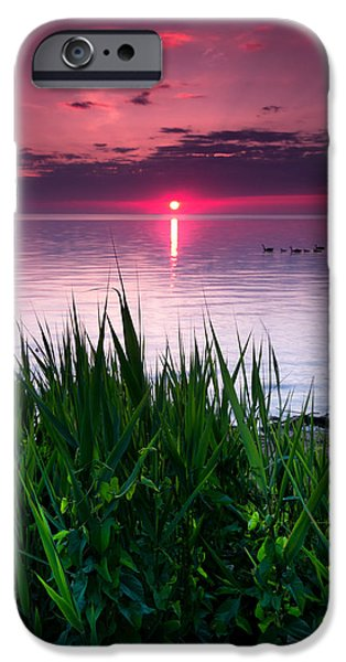 Windsor iPhone Cases - Geese at Sunrise iPhone Case by Cale Best