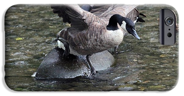 Sea Birds iPhone Cases - Geese flying iPhone Case by Dwight Cook