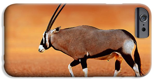 Glowing iPhone Cases - Gemsbok on desert plains at sunset iPhone Case by Johan Swanepoel