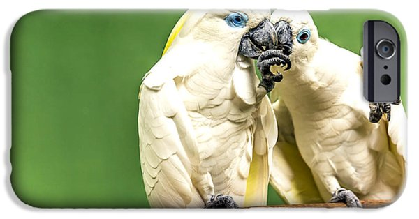 Fed iPhone Cases - Gentle Love iPhone Case by Jijo George