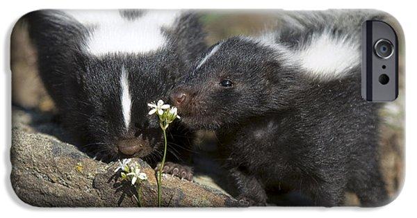 Animals Photographs iPhone Cases - Gentle iPhone Case by Wildlife Fine Art