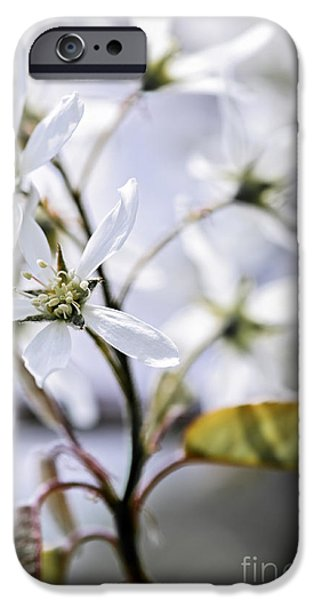 Gentle white spring flowers iPhone Case by Elena Elisseeva