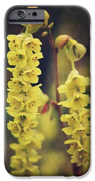 Texture Flower iPhone Cases - Gently Falling iPhone Case by Laurie Search