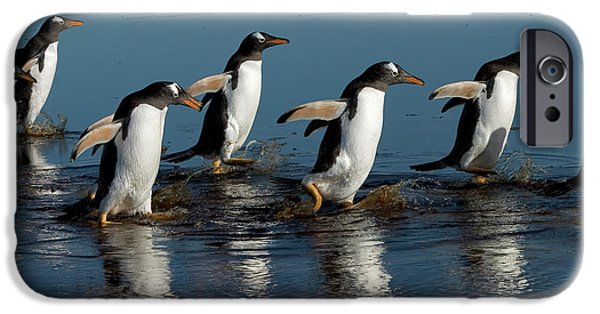 Following iPhone Cases - Gentoo Penguins Walking iPhone Case by Hiroya Minakuchi