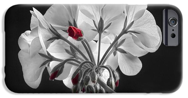 Red Geraniums iPhone Cases - Geranium Flower In Progress  iPhone Case by James BO  Insogna