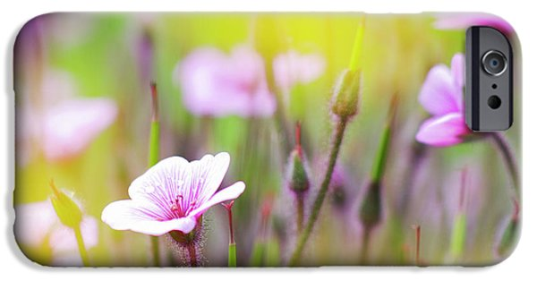 Close Up Floral iPhone Cases - Geranium iPhone Case by Heiko Koehrer-Wagner