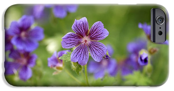 Annual iPhone Cases - Geranium Himalayense iPhone Case by Frank Tschakert