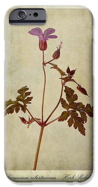 Stamen Digital iPhone Cases - Geranium robertianum iPhone Case by John Edwards