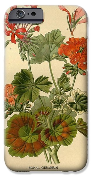 Botanical Drawings iPhone Cases - Geraniums iPhone Case by Philip Ralley