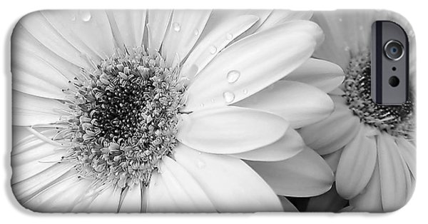 White Daisies iPhone Cases - Gerber Daisies in Black and White iPhone Case by Jennie Marie Schell