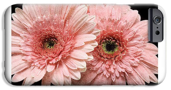 Flora Mixed Media iPhone Cases - Gerber Daisy Joy 4 iPhone Case by Andee Design
