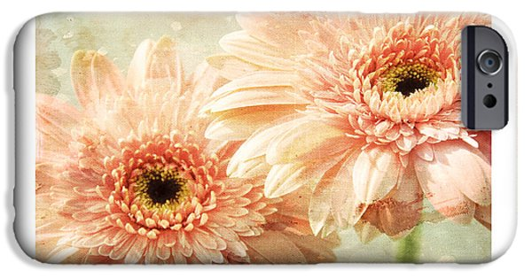 Close Up Floral Mixed Media iPhone Cases - Gerber Daisy Peace 2 iPhone Case by Andee Design