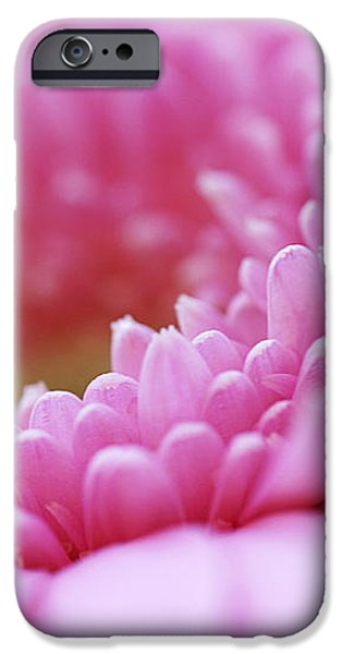 Gerbera Daisy Flower - Pink iPhone Case by Natalie Kinnear