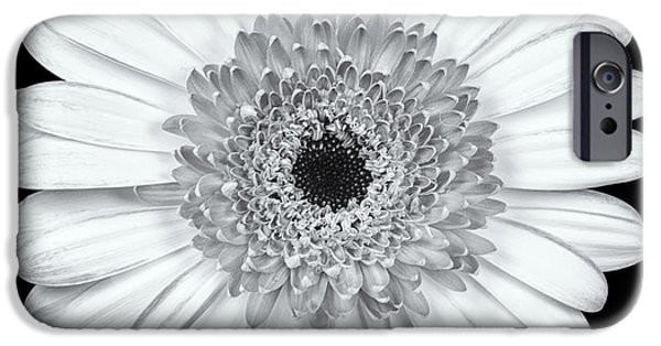 Daisy Bud iPhone Cases - Gerbera Daisy Monochrome iPhone Case by Adam Romanowicz