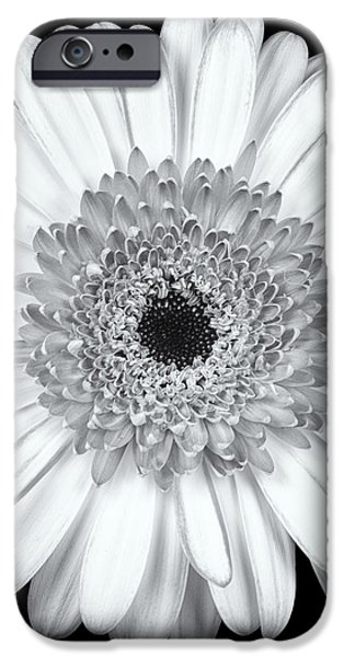 Gerbera Daisy Monochrome iPhone Case by Adam Romanowicz