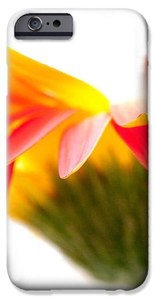 Gerbera Mix Crazy Flower - Orange Yellow iPhone Case by Natalie Kinnear