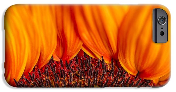 Close Up Floral iPhone Cases - Gerbera on Fire iPhone Case by Adam Romanowicz