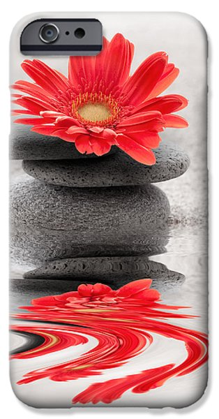 Gerbera reflection iPhone Case by Delphimages Photo Creations