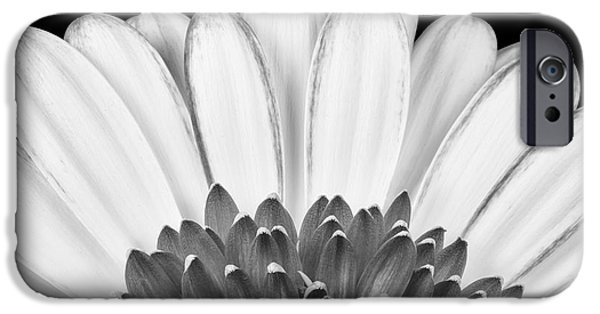Daisy Bud iPhone Cases - Gerbera Rising iPhone Case by Adam Romanowicz