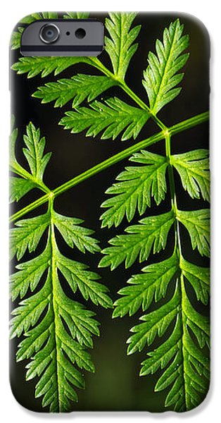 Gereric vegetation iPhone Case by Carlos Caetano