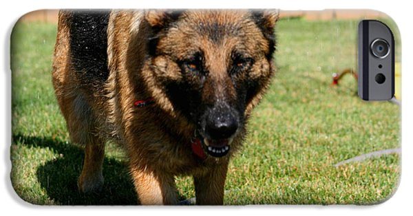 Iraq Greeting Cards iPhone Cases - German Shepherd iPhone Case by Kay Novy