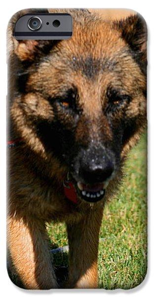 German Shepherd iPhone Case by Kay Novy