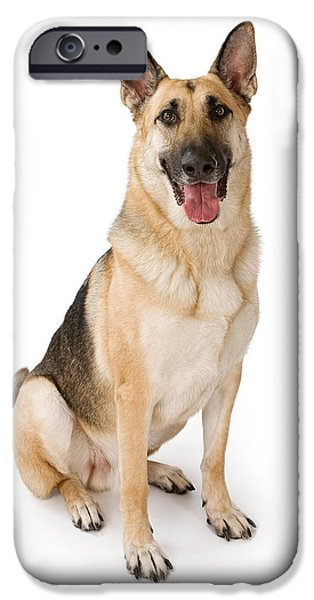 Police Dog iPhone Cases - German Shepherd Dog Isolated on White iPhone Case by Susan  Schmitz