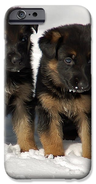 German Shepherd pups iPhone Case by Aimee L Maher Photography and Art