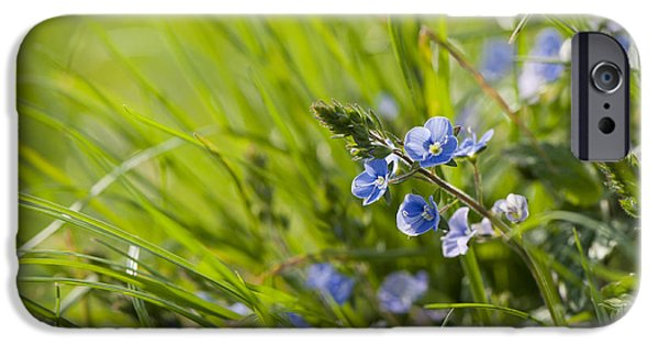 Close Focus Floral iPhone Cases - Germander Speedwell iPhone Case by Anne Gilbert